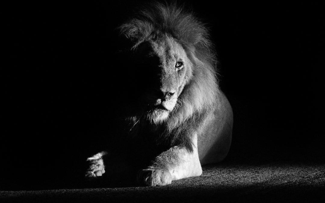 Black & White photographs of Wildlife