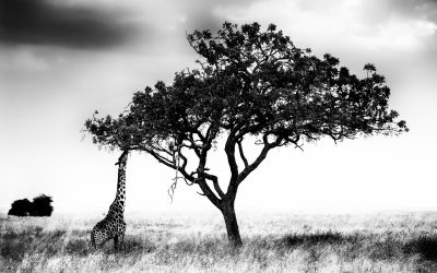 Trees of the Serengeti