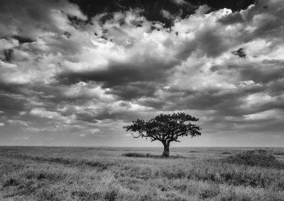Lone, Serengeti