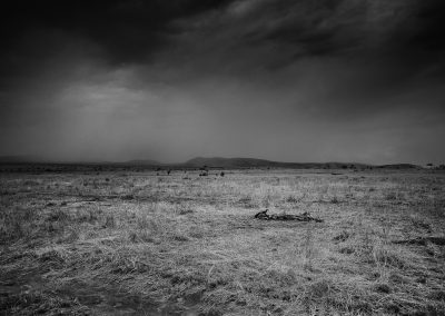 Carcass, Serengeti