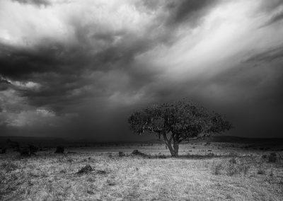 Sausage tree, Serengeti