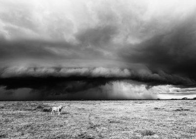 Lion and storm, Serengeti