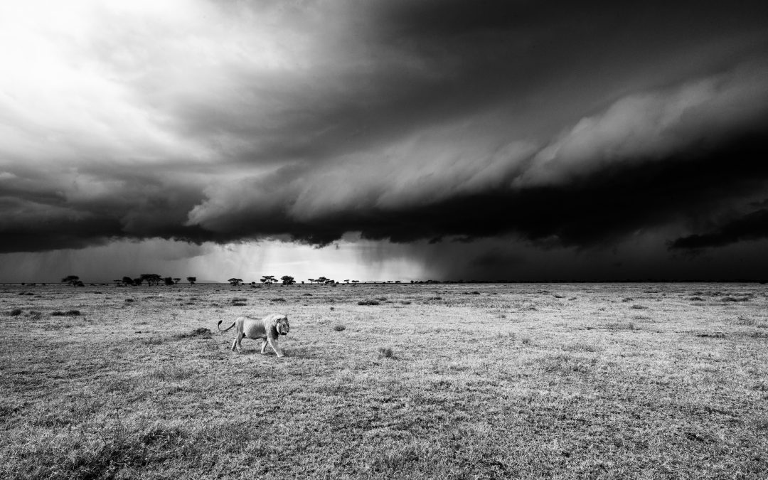 Storm in the Serengeti