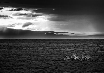Plains of the Serengeti